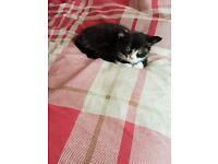 Kitten Available