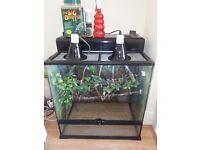 reptile chameleon/lizard/snake vivarium terrarium full set up bundle