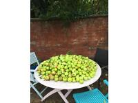 Free cooking apples