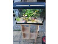 Aquarium and stand 60 litre full tropical set up