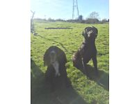 Dog walking/ training services