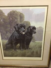 Framed picture of black Labradors. Limited edition by Nigel Hemmings.