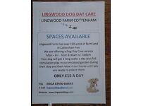 DAY CARE in Cottenham, No kennels or crates only cuddles and care. Treated as part of the family.