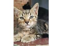 Kitten 10 weeks