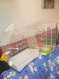 Variety of Cages and budgies