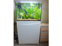 30 Gallon Aquarium with fish!