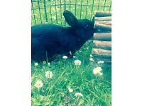Beautiful Black Bunny !