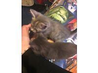 Bootifull kittens