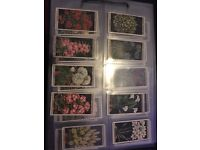 Collection of Wills cigarette cards