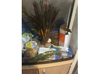 Fish tank with stand and accessories
