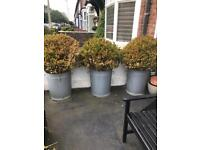 Free to collect x 3 garden bushes and bins