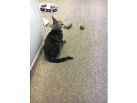 5 month old female kitten looking for a forever home