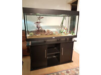 Open top 4ft 300 liter AQUA ONE FISH TANK FOR SALE,,FULL SET UP