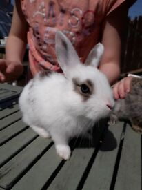 5 baby bunnies for sale would prefer them to go in pairs thanks