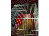 Hamster cage and dwarf hamster