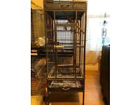 Parrot and medium cage