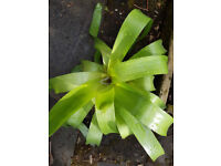 Large House plant Agave low maintenance indoor plant green foliage