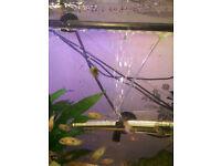 Jewel tropical fish