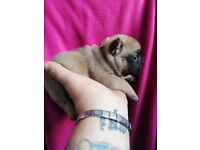 Pets for Sale - Gumtree