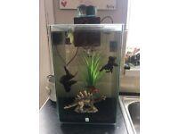 Fluval chi 25litre fish tank