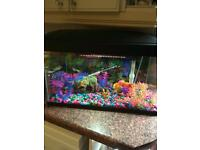Tropical fish tank for sale