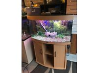 180l Juwel bow front fish tank full set up with stand 2 x light filter heater lid gravel ornament