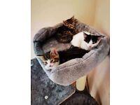 3 Little gorgeous kitten 2 boys 1 girl ready for a new home