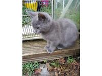 Six lovely kittens for sale