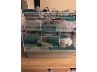 2x hamsters