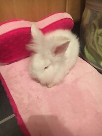 **BABY RABBIT FOR SALE ***