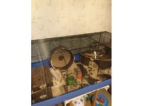 Hamster and large hamster cage