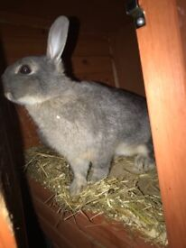 3 Rabbits and 2 Bluebell Hutches for sale
