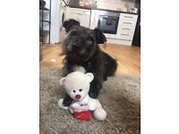 Professional and her dog seek home or housemate! Totterdown