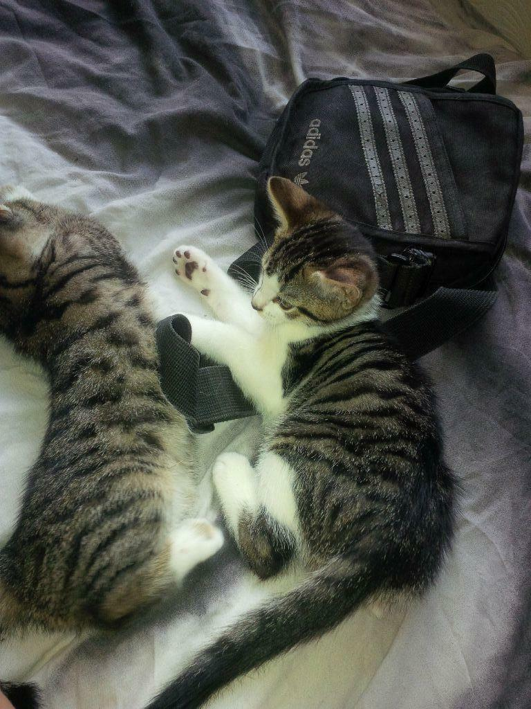 Kittens Free To Good Home Bristol