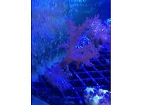 Marine corals from £3