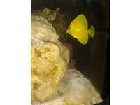 Kent Bio reef Marine Aquarium - fully set up.