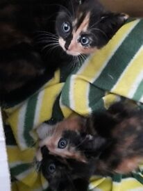 4 Kittens looking for a good home £50 each