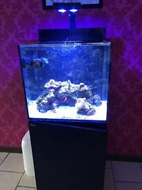 Red Sea Max E170 Reef Spec All in One Setup