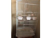 4 Zebra Bengalese finch birds for sale including big cage food