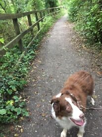 Do you need your dog walking or need someone to sit with them?