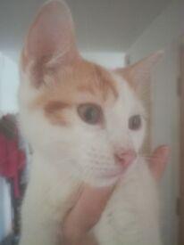 4 month male kitten for sale