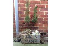 Wooden garden crate with plant