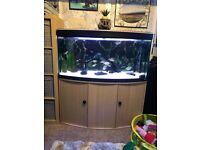 Large tropical fish tank full setup