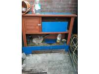 Rabbits and hutch