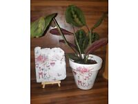 Mum/ mothers day plant pots and slates