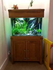 Solid oak aquarium with equipment