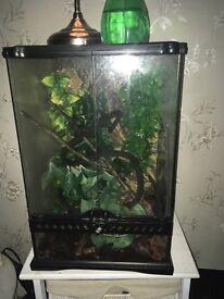 Crested gecko + set up