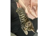 Kitten needs rehoming