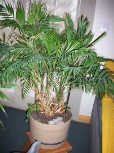 Indoor tropical plant plante tropicale int rieur for Plante interieur
