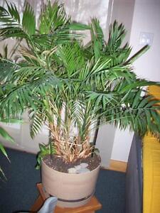 Indoor tropical plant plante tropicale int rieur plants fertilizer soil ottawa kijiji for Plante dinterieur